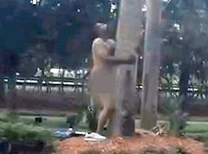 Man filmed having sex with tree in broad daylight