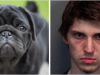 C:\NUCDaily\Images\proj5\Man Who Beheaded 4 Dogs Gets Up To 28 Years In Prison.png