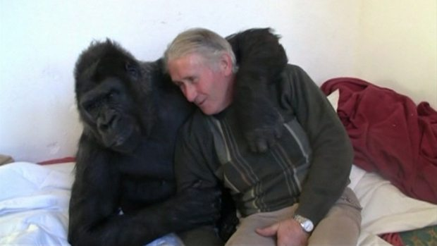 French couple has lived with a gorilla for 18 years