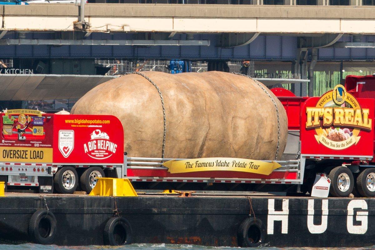 gigantic-potato