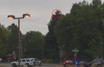 man-hides-in-tree
