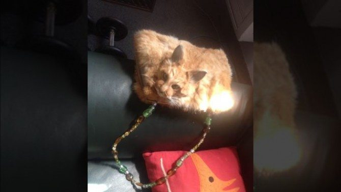 After Keeping Carcass In Freezer, Artist Turns Roadkill Cat Into Thousand-Dollar Shoulder Purse