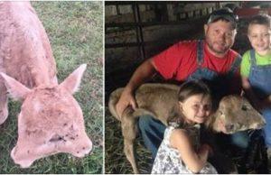 C:\NUCDaily\Images\proj7\Meet Lucky, the Calf Born With 2 Faces.jpg