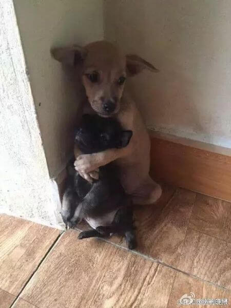 They Rescued Two Puppies From The Street