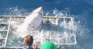 Shark Breaks Through Diver Cage