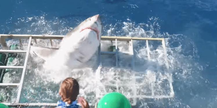 Shark Breaks Through Diver Cage