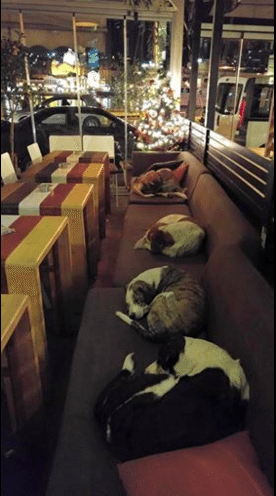Coffee Shop Opens Its Doors To Stray Dogs