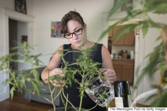 Home Marijuana Plant