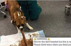 Dog vomiting after eating chocolate